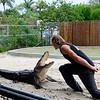 Performing at Evergaldes Alligator Farm. Photo by Danny Cueva