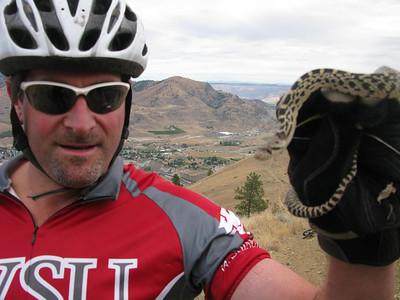 Bull Snake, Chelan Butte.