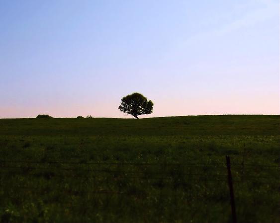 green tree - Copy (2)