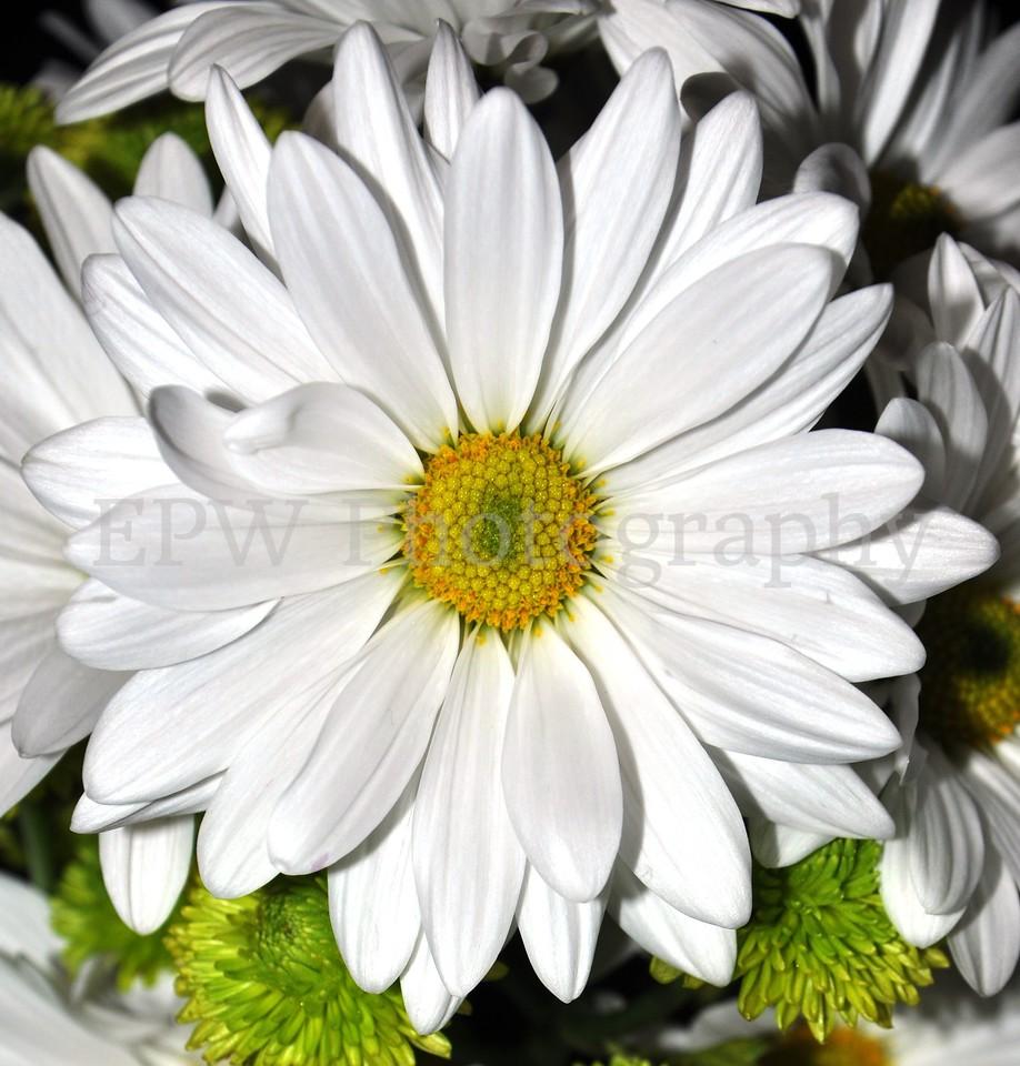 Darling Daisy