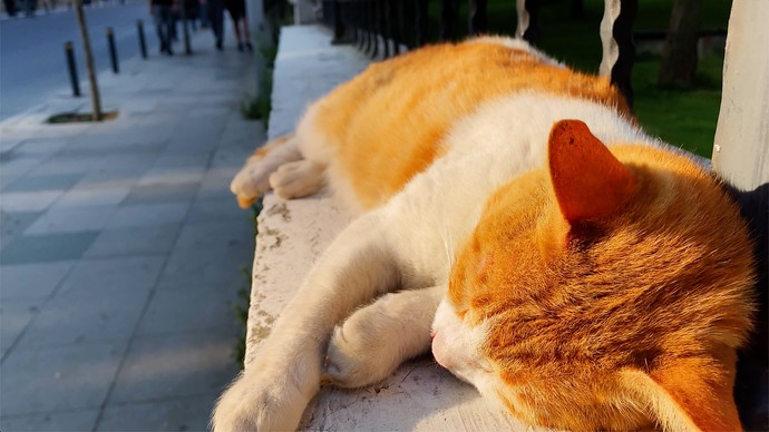 What's Up With All The Cats In Istanbul?