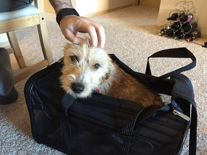 traveling terrier