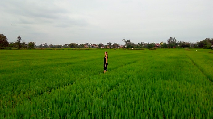 vietnam fields