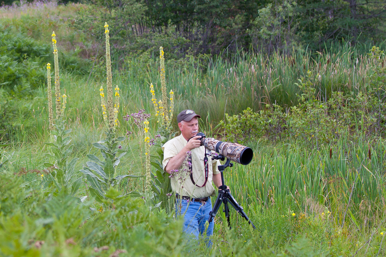 Gary Gee photographing goldfinch feeding on thistle in a marsh within Seney National Wildlife Refuge
