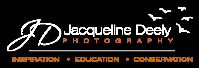 2018_logo_website_transparent