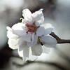 Spring13_45