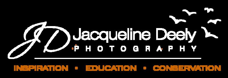 2018_logo_website_transparent_v2