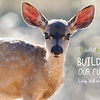 fawn-poster-header