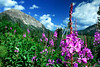 All photos were taken at American Basin,Yankee boy basin and Crested Butte Co.   By Daniel P Woods