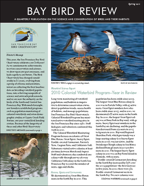 bay_bird_review_spring_2010