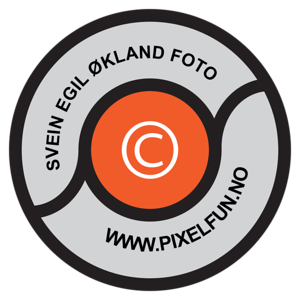 2013 logo M-TEKST