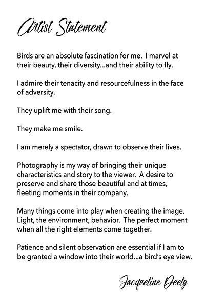 Artist Statement - BIrd's Eye View Photographic Exhibition