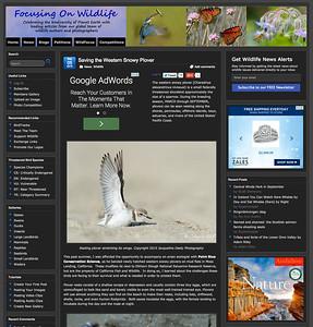 Focusing On Wildlife