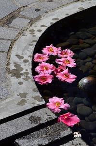 Petal pond