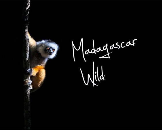 MADAGASCAR WILD - BLURB COVER FOR   WEBSITE (1)
