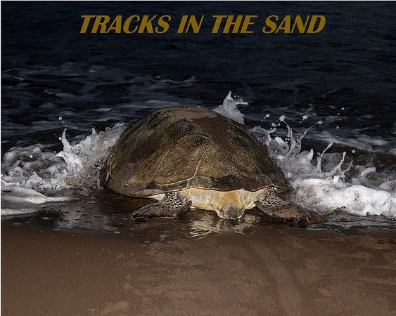 TRACKS IN THE SAND - BLURB COVER   FOR WEBSITE (1)
