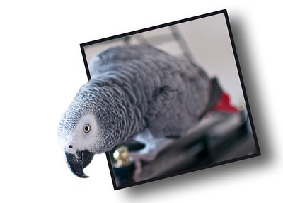 <H2>Pet Portraiture</H2> New to Dave Crosby Photography are distinctive pet portrait services.