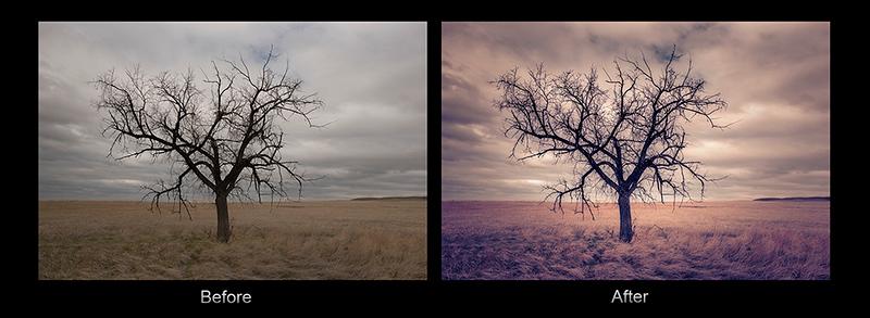 Pawnee Tree B&A
