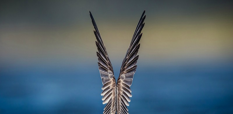 Feathered Symmetry