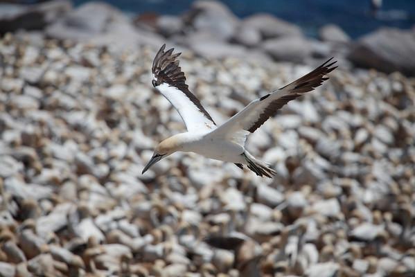 BIRD ISLAND_DH-0106