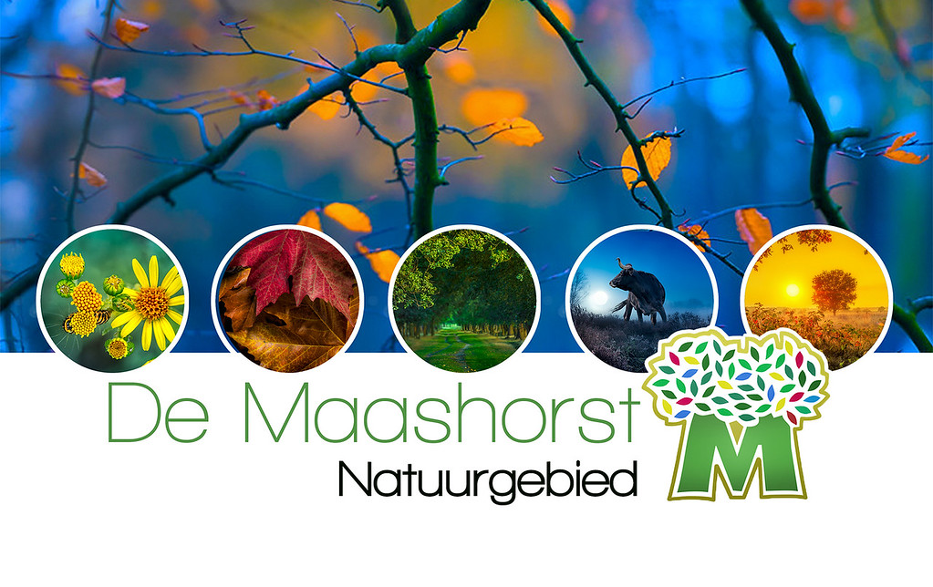 maashorst web pagina design by oxovisuals 1920