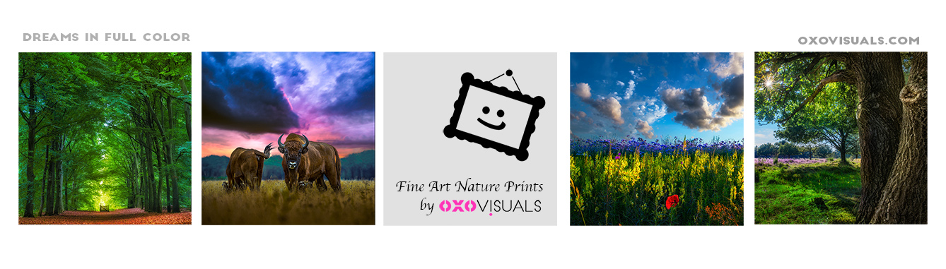 Purchase Fine Art Nature Prints made by oxovisuals