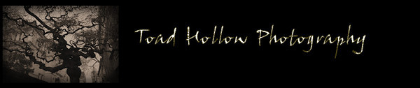 ToadHollowPhotography-Banner