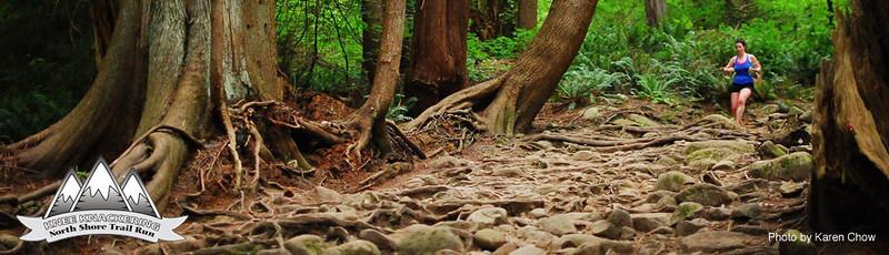 treesandroots