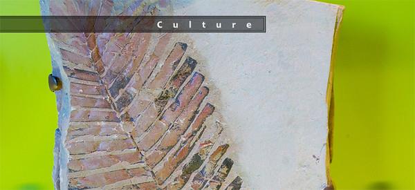 culture 710