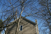 20080211 Tulip Poplar, struck by lightning June 11 2006 that was felled by wind yesterday (9 of 10)