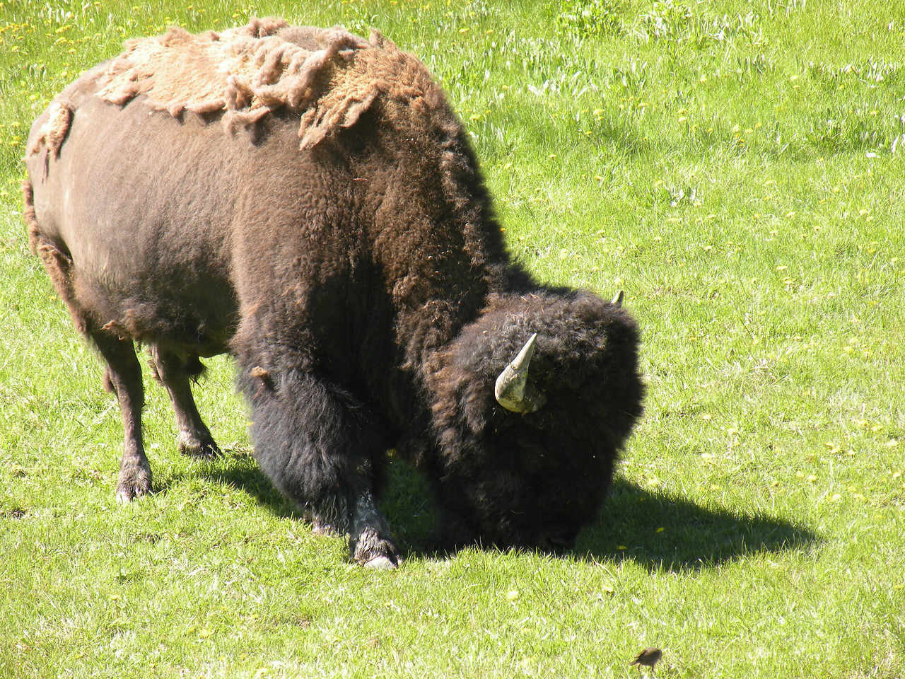 Mack's Buffalo