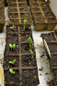 starter seeds, one of my favorite things