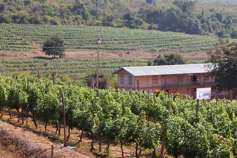 red mountain vineyards