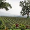 Ayetharyar winery - Shan State