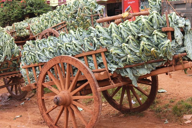 cauliflower, Shan State