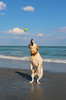 Willow plays catch.