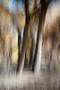 Bosque #2