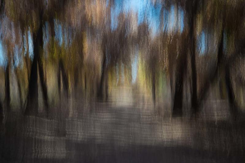 bosque walk