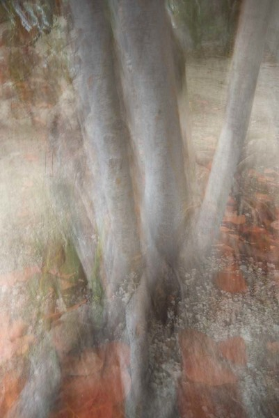 ethereal forest #4