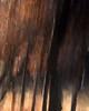 tender oak
