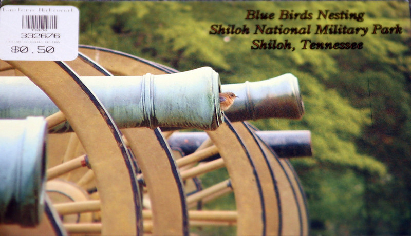 At the park souvenir shop we were told that bluebirds often nest in the barrels of the many cannon found around the park and we were shown this postcard.  Several of us offered to buy it but it was the last one they had in stock.  However, they did allow me to take a picture of it (front and back)