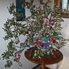 """Gloria e Paolo hanno decorato Villa Gio con quest' """"albero"""" fatto di un ramo di Olivo! e l'albero Natale dell'anno scorso (alla veranda-prossima foto!): Il miglior regalo di Natale per noi!"""