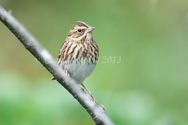 Vesper Sparrow      ??<br /> <br /> October 14th, 2015