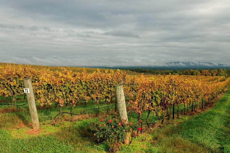 Valley View from Raffaldini Vineyards