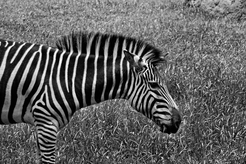 Black and White of White on Black
