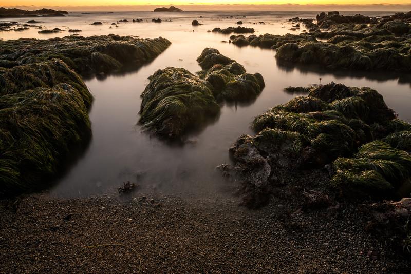 Weeds at Sea