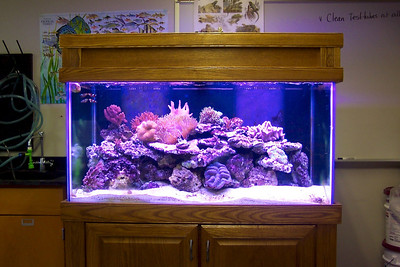 120 gallon reef aquarium at Bloomsburg High School (Bloomsburg, PA)
