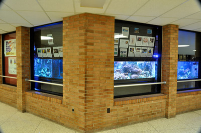 Main display aquariums at Williamsport Area High School (Williamsport, PA). 300, 125 and 300 gallon tanks.