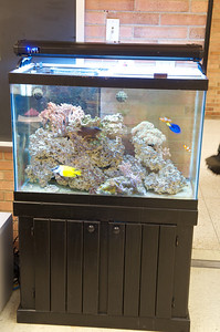 65 gallon aquarium in the office at Williamsport Area High School (Williamsport, PA).