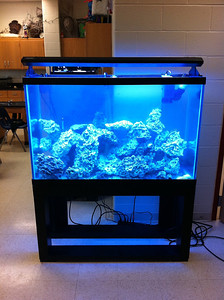 New 110 gallon reef aquarium at Lake-Lehman High School (Lehman, PA). August 2011.